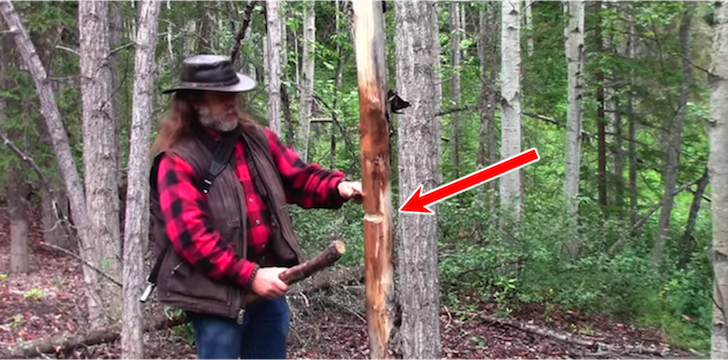How To Cut Down A Tree Using Only A $15 Pocket Knife